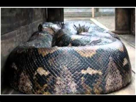 gambar foto video binatang terbesar  dunia youtube