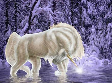 imagenes de unicornios y caballos im 225 genes de unicornios banco de imagenes y portadas para