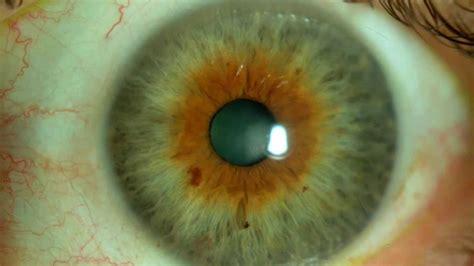 color avellana el color de los ojos ojos avellana 225 mbar y marrones
