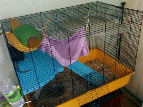 Hamac Pour Rat Fait Maison by Un Hamac Pour Rongeurs Forum Rat Rat Wamiz