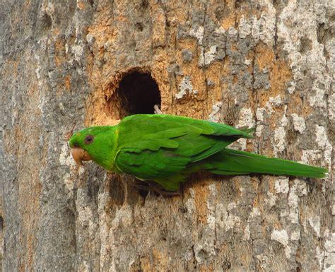 birds and their nests quinta mazatlan blog