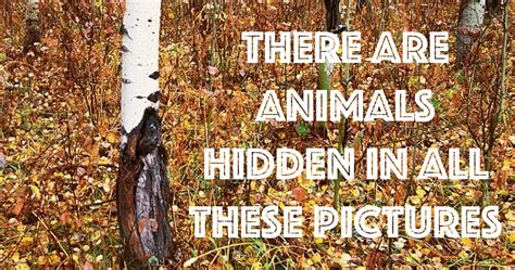 Find Pictures Of You Most Can T Find The Animals In These Nature
