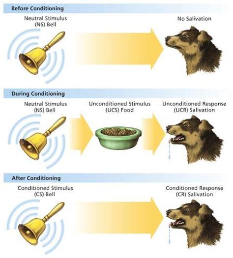 pavlov dogs pavlovian classical conditioning ilmu branding terpenting yang sering terlupakan