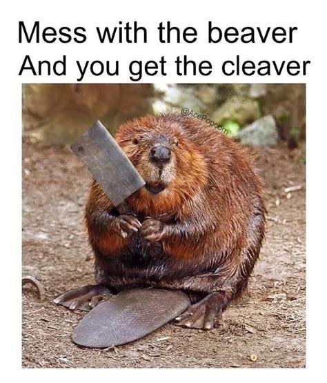 Mess Meme - 17 best ideas about comment memes on pinterest fb