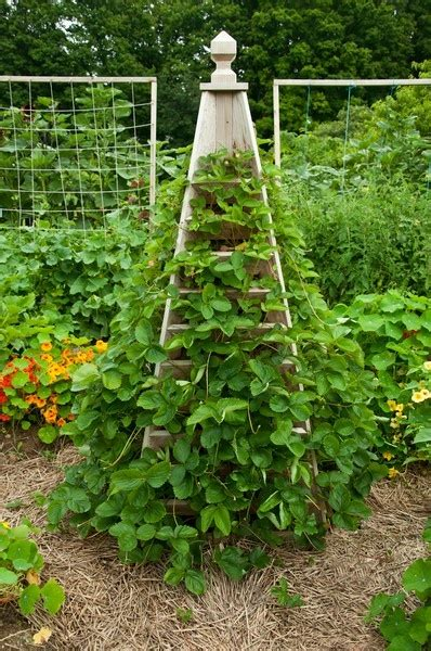 Strawberry Vertical Planter by Vertical Strawberry Planter This Chicfluff