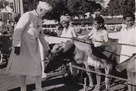 nehru s india livemint chacha nehru and his furry friends slideshow livemint