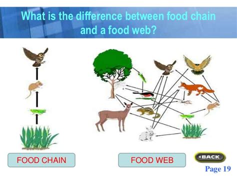 difference between puppy food and food what is the difference between a food chain and a food web take a breeds picture
