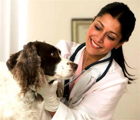 imagenes de medicas veterinarias felicidades a los m 233 dicos veterinarios en su d 237 a