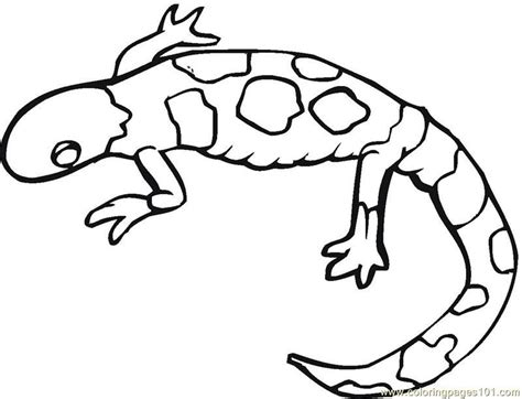 Coloring Page Gecko by Gecko Coloring Pages Coloring Home