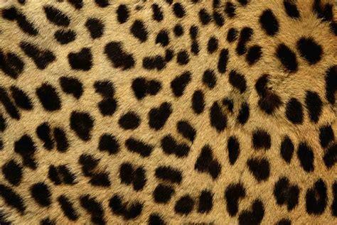 imagenes animal print wallpaper animal print muy buenos 99 jpg im 225 genes taringa