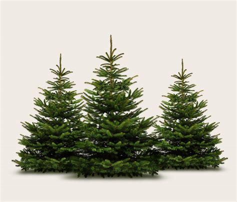 weihnachtsbaum kaufen in heidelberg christbaum center