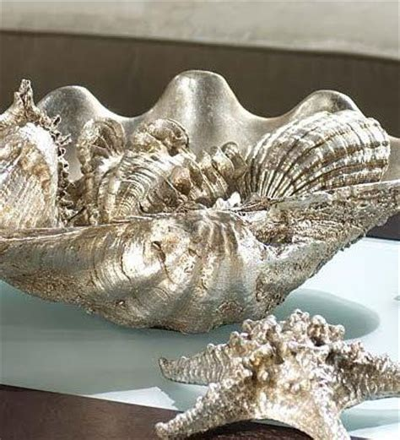 ideas  clam shells  pinterest shell