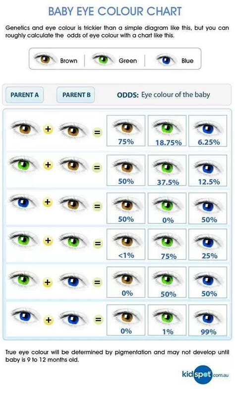 eye color genetics baby eye color chart writing references