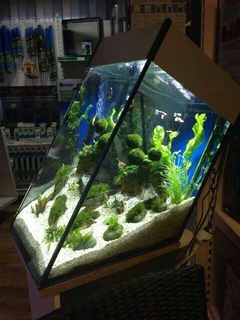 aquarium design usa 95 best fish tank images on pinterest fish tanks