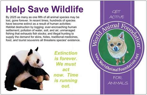 don t save anything uncollected essays articles and profiles books week 3 saving endangered species research and