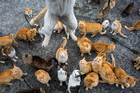 cat island japan japan s cat island a visit to aoshima where cats