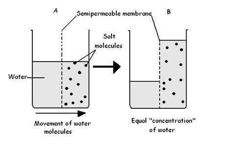 osmosis diagram image gallery osmosis diagram