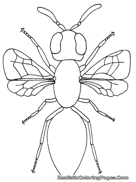 free coloring pages of insects for kids