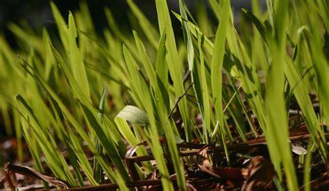 Steine Statt Rasen by Rasen W 228 Chst Nicht Typische Fehler Und Hindernisse