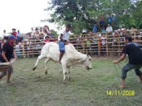imagenes de toros fotos de toros cebu related keywords suggestions fotos