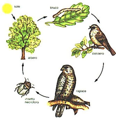 catena alimentare bosco catena alimentare di un bosco