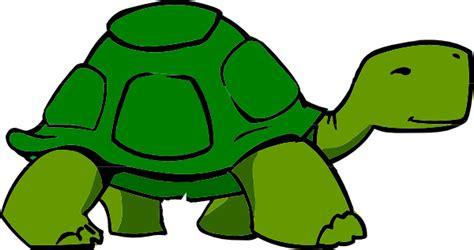 google images turtle cartoon turtle google search alphabet project