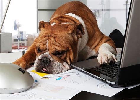 dogs at work pet friendly offices often don t consider whether it works for the pets