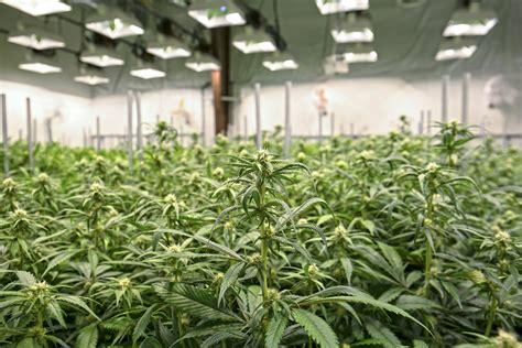 top marijuana etfs    motley fool