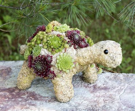 how to make a succulent turtle photos of succulents types of succulent plants