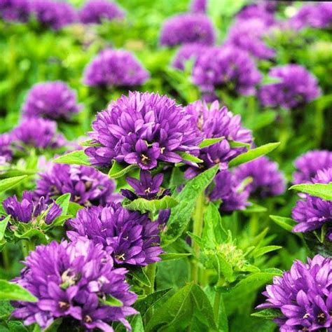 Best Flowers For Cutting Garden The Best Perennials For Cutting