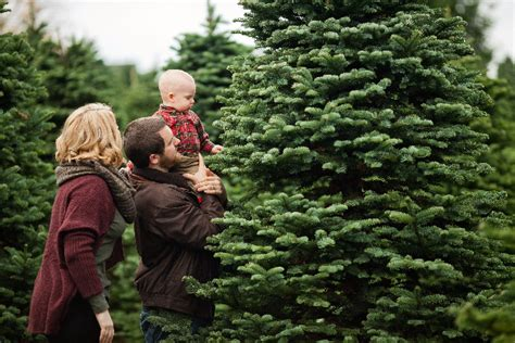 christmas tree farms near mt hood oregon agriculture u farms wineries and farmers markets