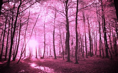 enchanted forest enchanted forest backgrounds wallpaper cave
