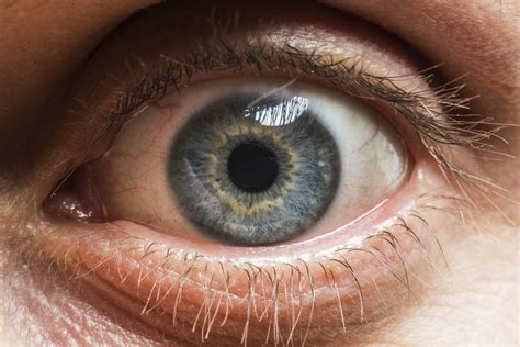 the eyes of the these macro photos reveal the awesome diversity of human eyes huffpost