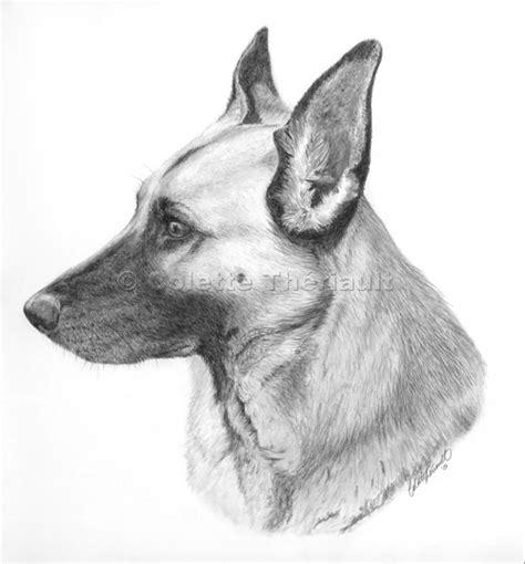 german shepherd puppy drawing german shepherd drawing pet portraits drawing custom graphite pencil pet portraits