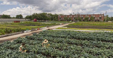 growing the garden chicago botanic garden