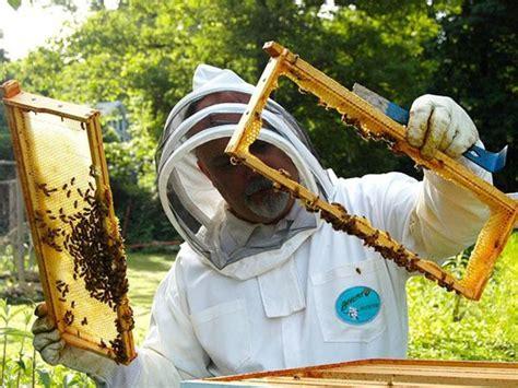 imker hessen sind die bienen in gefahr 246 koleo umwelt und