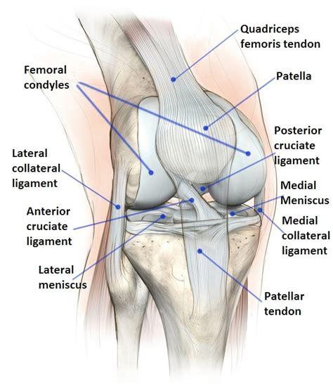 innerer meniskus meniskusriss im knie schmerzen symptome operation anriss