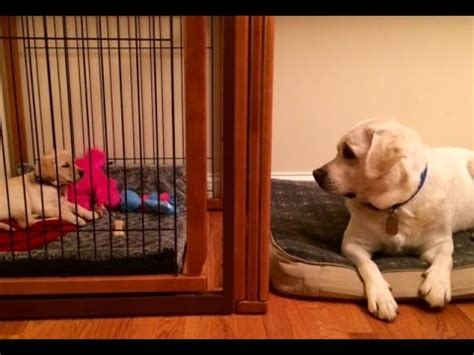 how to stop from barking in crate how to stop barking in the crate doovi