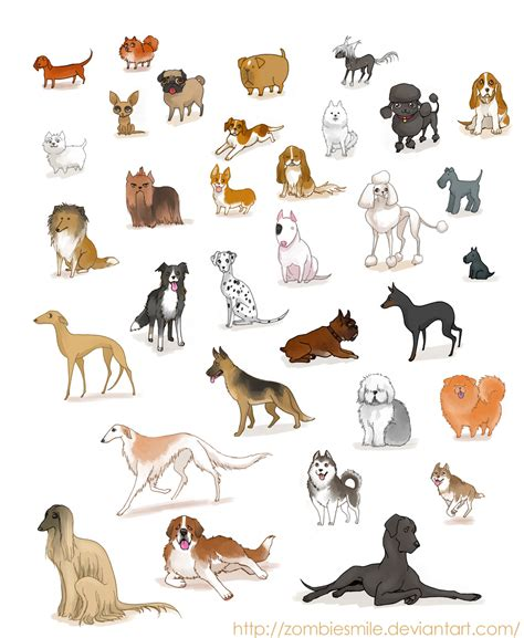 all kinds of dogs all kinds of dogs with pictures and names breeds picture