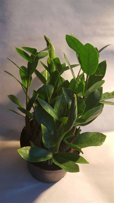 easy houseplants easy low light houseplants for indoor decor 32 decomg