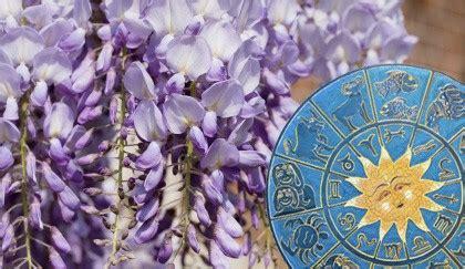 oroscopo dei fiori oroscopo dei fiori qual 232 la pianta dei pesci leitv