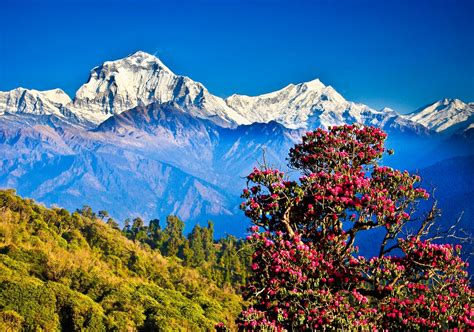 images of nepal 38 reasons why should you visit nepal for once in a