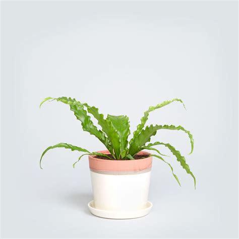 317 best windowsill plants images on