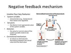 feedback diagram feedback mechanism diagram images