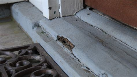 Image Gallery Exterior Threshold Exterior Door Sill Replacement