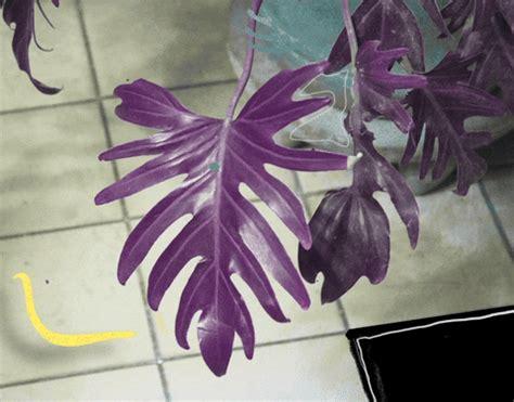 plant gifs    gif  giphy