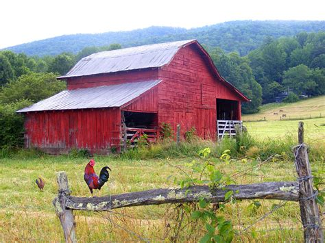 red barn red barn and rooster photograph by duane mccullough