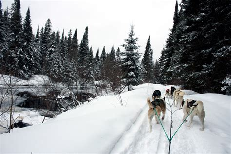 dog sledding in algonquin with chocpaw expeditions