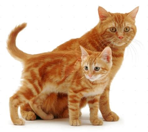Cute mother and baby   Cats & Animals Background