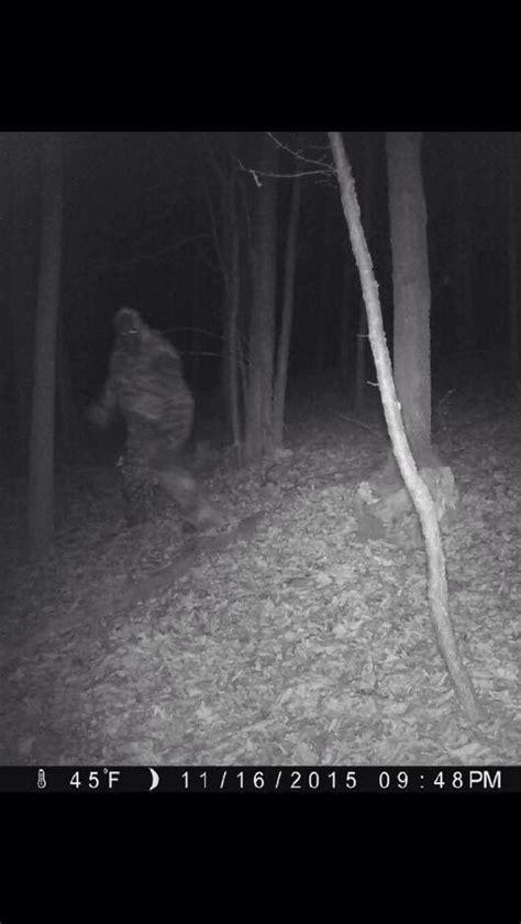 Big Foot Search 25 B 228 Sta Bigfoot Sasquatch Id 233 Erna P 229 Bigfoot Kryptozoologi Och Plysch